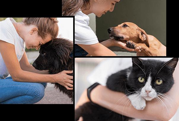Become a Doggie Rescue Life Saver