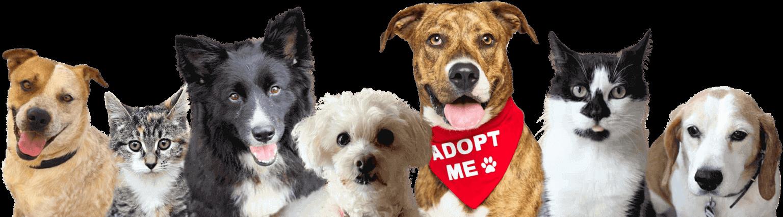 Doggie-Monika-Rescue-Adopt-a-Pet-img (1)