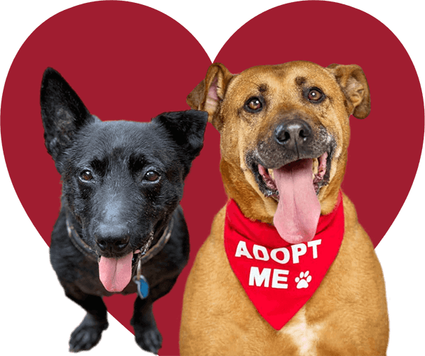 Monikas-Doggie-Rescue-Adopt-a-Dog