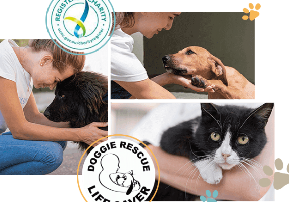 Become-a-Doggie-Rescue-Life-Saver img (1)